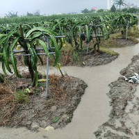 Agricultural loss from the flood in southwestern and southern Taiwan estimated to be over NT$560 million