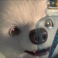 本土創作傳捷報!台灣動畫《漂》獲聖地牙哥國際兒童影展最大獎