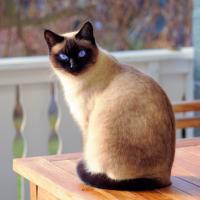 紐西蘭這個地方將禁貓?爲什麽