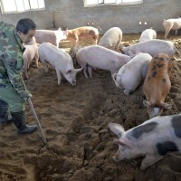 Amid swine fever fears, Taiwan to crack down on meat smuggling from China