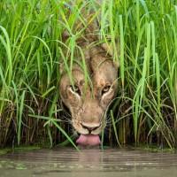 第54屆「野外生態攝影師」即將登場 先睹為快部分作品!