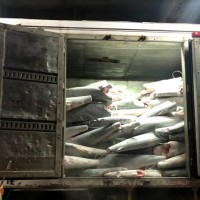 Taiwan nabs truck-load of illegal shark meat