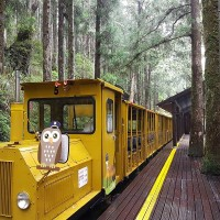 'Bong Bong' tourist train on Mt. Taiping in NE Taiwan to resume service after 6 years