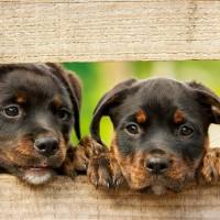 美FDA警告 多款除蚤劑恐造成寵物癲癇
