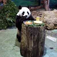 Taipei Zoo animals treated to Mid-Autumn Festival feast