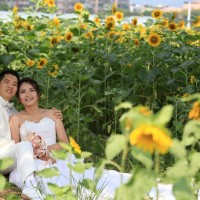 More than 200,000 sunflowers in bloom at Taipei's Rainbow Riverside Park