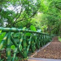 台灣「淡蘭古道」入選世界步道大會影展片 獲熱烈迴響
