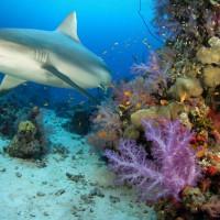 非洲幾內亞灣 歐洲漁船非法捕撈鯊魚