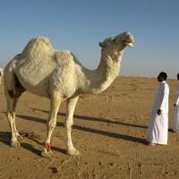 沙烏地阿拉伯MERS疫情擴大 32例確診、10起死亡
