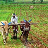 應印度當局需求 台外貿協會樂當「智慧農村」幕後推手