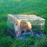 荷蘭晨運民眾意外發現遺棄小獅子 警方正尋找飼主中