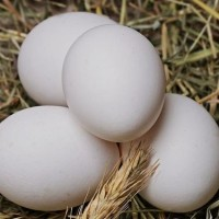 Taiwan company accused of selling eggs past sell-by date