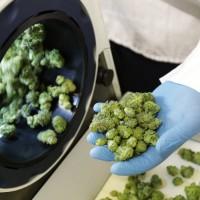 加拿大大麻全面合法化 未來市場可期