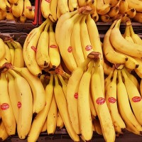 Japanese students receive free Taiwan-grown bananas