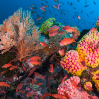 What makes coral reefs resilient?