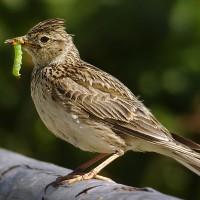 與鳥類毗鄰而居將夢碎?法國農場展開生物多樣性回歸計畫