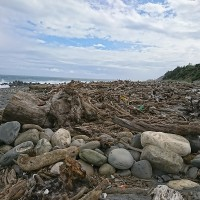 Driftwood in eastern Taiwan open for picking from Oct. 15