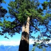 漫步北中南東生態自然步道 林務局大推這四條