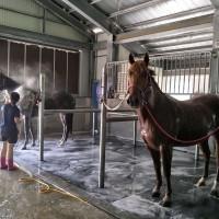 抗蛇毒血清產製生力軍 國家免疫馬匹畜牧場屏東揭牌