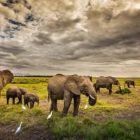 物種滅絕加速 地球哺乳動物恐需逾500萬年復原