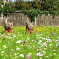 Cosmos flowers blooming at Meiti Riverside Park in Taipei