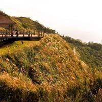 2018 Silver Grass Festival of Caoling Historic Trail kicks off Nov. 3