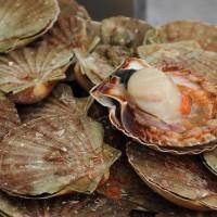 貝類水產品潛藏中毒危機 嚴重恐造成短暫性記憶力喪失