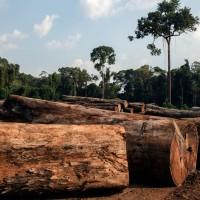 一年大砍8千平方公里雨林地 巴西生態前景堪憂