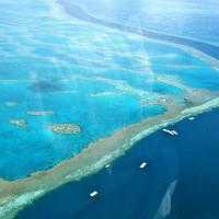 搶救澳洲大堡礁!科學家將大規模「人工受孕」珊瑚抗暖化