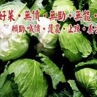 護好菜護農 義美宣布收購高麗菜150公噸 望止跌回穩
