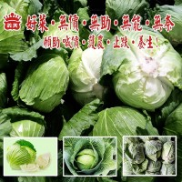 I-Mei Foods plans to purchase 150 tons of cabbage to stabilize falling prices