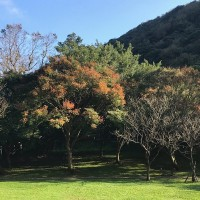 It's time to enjoy leaves changing colors at Taipei's Yangmingshan