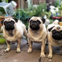 市售狗糧維生素D超標70倍 美FDA召回8品牌