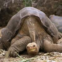 國際研究團隊揭開烏龜長壽秘密