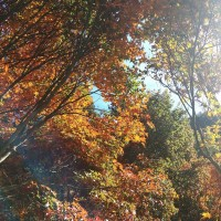 December is best time to enjoy autumn leaves at Wuling Farm in central Taiwan