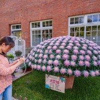 What to catch at last weekend of Taipei's Shilin Residence Chrysanthemum Show
