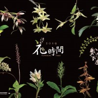 林試所2019年花時間月曆以內頁12種臺灣原生蘭的植株作為封面。(圖片來源:林業試驗所)