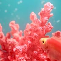 配色指標出爐!Pantone公布2019代表色:「活珊瑚」好療癒