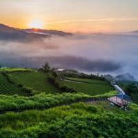 Taiwan's Pinglin tea zone is a Top 100 Green Destination
