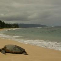 法馬約特島瀕危綠蠵龜 非法盜獵威脅存續