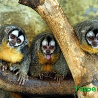 Nocturnal animals at Taipei Zoo to have a home again after being displaced for 6 years