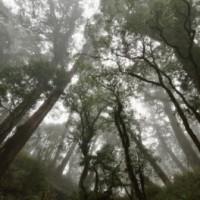 中央山脈森林秘境 發現上百株珍貴紅檜巨木