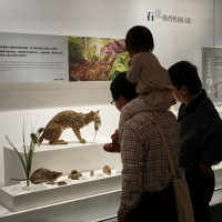 Exhibition of Taiwan's leopard cats aims to promote conservation efforts