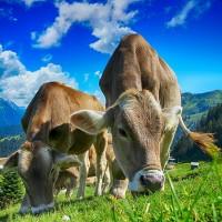 新年環保新希望 少吃肉救地球