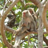 「陸域保育類野生動物名錄」 新增17種台灣物種、1科10種國外物種