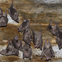 New type of filovirus, related to Ebola, discovered among bats in China