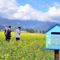 Township in eastern Taiwan holds competition for most popular canola flower field
