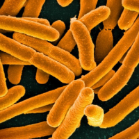 2 new strains of super antibiotic-resistant bacteria found in patients in China