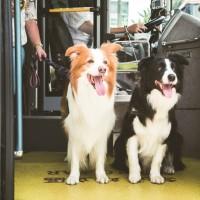 北市友善狗狗公車新措施 中大型犬「免裝籠」、「免費」搭乘