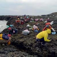 暖冬紫菜價格看漲 澎湖200村民快樂採「黑金」
